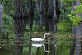 Louisiana scenery images Welcome to louisiana quot the bayou state quot jpg