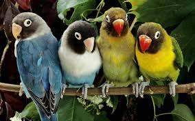 a group of birds hd animals and birds wallpapers for mobile and