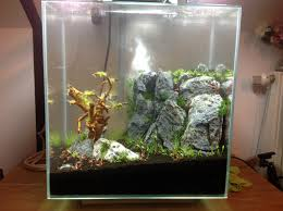 Fluval Edge Aquascape Fluval Edge 2 Aquaspaping Aquascaping Einsteiger Aquascaping Forum