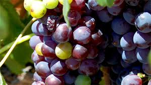 learn about wine an easy explanation of wine types primer
