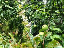visiting a hillside backyard permaculture in hobart milkwood