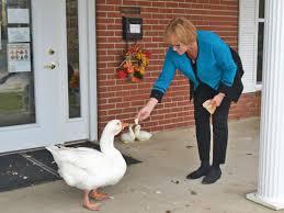 Seeking Companion Goose Seeking Goose News Sports Times Republican