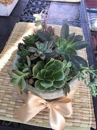 succulent planter in agoura hills ca oakbrook florist u0026 the