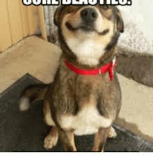 Birthday Cake Dog Meme - 25 best memes about do i smell birthday cake do i smell