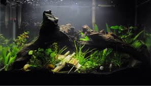 want to do a wars themed tank the planted tank forum