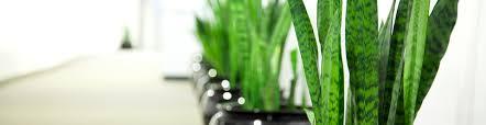 indoor plant hire sydney the plant man