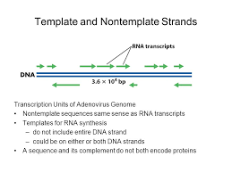 rna metabolism transcription and processing ppt video online
