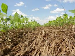 cover crop seed mixes soil and water agricultural technologies