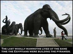 cloning wooly mammoth science pin u0026 shared