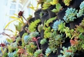 Vertical Garden Adalah - tanaman hias grosiran