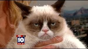 Image 9 Best Grumpy Cat - grumpy cat pictures and jokes funny pictures best jokes comics