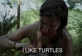 I Like Turtles Meme - i like turtles the walking dead meme by diinoyt on deviantart