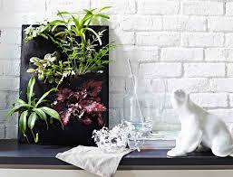 unique indoor plants inspire home design