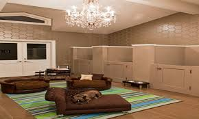 pet room ideas designing ideas for small spaces dog room design pet rooms