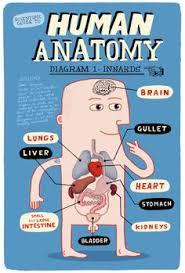Cartoon Human Anatomy Happy Organs Anatomy By Katalin Berinkey Via Behance Med Art