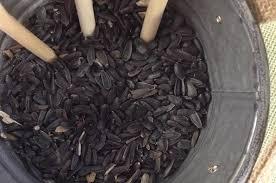 black oil sunflower seeds you do it suet
