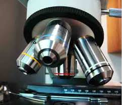 compound light microscope uses compound light microscope parts images photographs from science