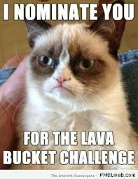 I Can Has Cheezburger Meme - a collection of grumpy cats best memes i can has cheezburger