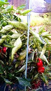 blog sunnysidelocal produce and nursery seasonal produce