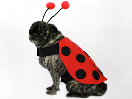 diy ladybug halloween costume for dogs how tos diy