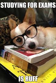 Studying Meme - finals don t have to be stressful look at this dog pharmacy