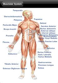 Learning Anatomy And Physiology Free Online Human Anatomy And Physiology Lindastorm Net