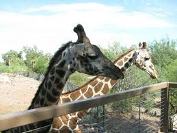 phoenix zoo lights military discount phoenix zoo 2018 all you need to know before you go with photos
