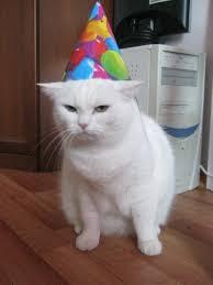 Happy Birthday Cat Memes - lolcats happy birthday lol at funny cat memes funny cat