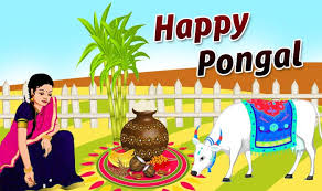pongal 2017 importance and significance of the 4 day traditional