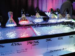 reef tank lighting schedule lighting solutions for your reef tank petcha