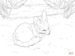 fennec fox curls up into a ball coloring page free printable