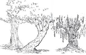 brizl u0027s place tree sketches