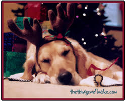 photo christmas cards ideas for the perfect shot oh the things