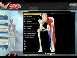 3d Knee Anatomy 18 Best 3d Muscle Anatomy Images On Pinterest Muscle Anatomy