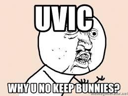 Meme Generator Why U No - uvic why u no keep bunnies y u no meme meme generator