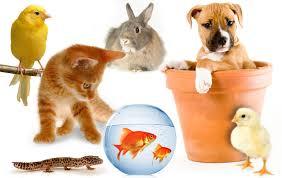 animali da cortile definizione animali in casa come scegliere quello fa per voi benessere