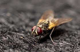 keeping flies in check a guide to fly control debugged