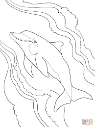 bottlenose dolphin coloring page free printable coloring pages