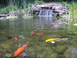 Pond Landscaping Ideas Large Pond Landscape Ideas Images About Waterfall Ideas Large