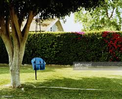 baby swing chair hanging from tree in backyard stock photo getty