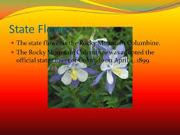 State Flower Of Colorado - colorado by aden wolfe ppt video online download