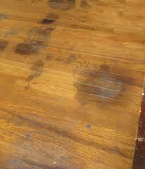 hardwood floor pet stains solution addicted to rehabs