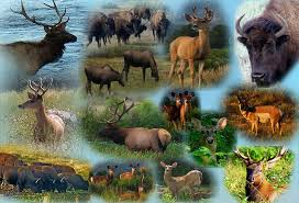 Kansas wild animals images Wild animals collage jpg