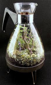 miniature garden in a coffee pot makes a cool terrarium the