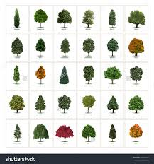 different types of trees stock vector thirty different vector tree illustrations tree types