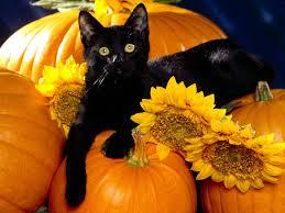 funny halloween background halloween kitty wallpaper