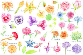 edible flowers watercolor edible flowers clipart by cornercroft thehungryjpeg