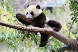 kids stuff giant panda