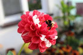 beautiful plants plants beautiful flowers free photo on pixabay