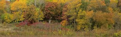 lakeshore nature preserve u2013 division of facilities planning